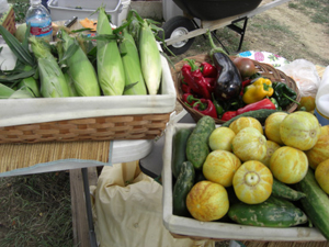 Corn, cucumbers, and peppers at Father Earth Organic Farm