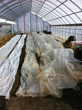 High Tunnel Greenhouse in late February