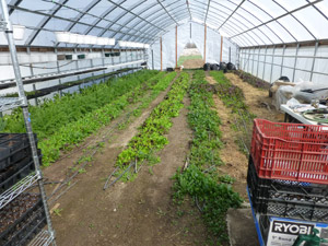 High Tunnel Greenhouse in mid April